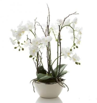 Luxury Orchid Arrangement send to amman jordan